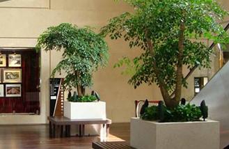 长沙办公室装修公司在装修设计报价时对办公室整装中创意绿植的处理过程与装修材料软装配饰一站式装修设计施工
