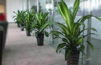 长沙办公室装修公司在装修设计报价时对办公室中创意绿植整装的处理与装修材料选配